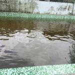 Black water pool