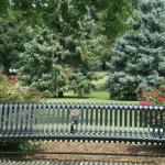 Bench and roses