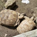 Exotarium: Ferme de Reptiles