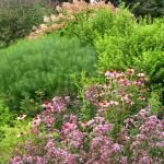 Flowering bed at the arboretum