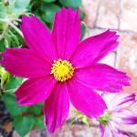 I fiori dell'Agriturismo Colle al Sole