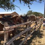 Foto de Twin Elm Guest Ranch