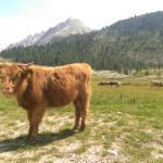 Wiese mit Kühen direkt vor der Tür