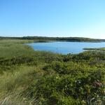 Pond view from bench in dune