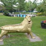 "The ""elegant"" golden lion in front of the pool"