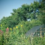 butterfly garden and shed