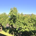 Vista desde la ventana (panorámica)
