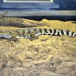 They have some beautiful reptiles, staff is friendly and very knowledgeable. Great place to take