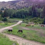 Foto de Diamond D Ranch