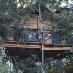 One of the treehouses at Marc's Camp