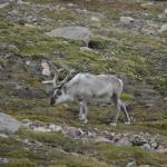 Foto de Gabba Reindeer Safari Park