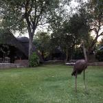 Photo of Hornbill Lodge