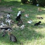 вонючие кошки