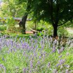Beautifully groomed grounds at Mackay Bar Ranch