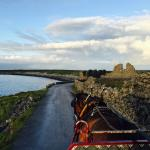 Pony & Trap Tour of Inishmore with Thomas Faherty of Seacrest B&B