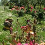 Agriturismo La Falconara Foto