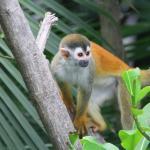 Monkeys outside our bedroom window