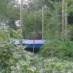 This is our Yoga Platform where you can join the session  around moringa , mango trees and pinea