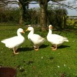 Mable, Ethle and Baby