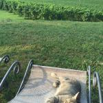 La valle e le vigne