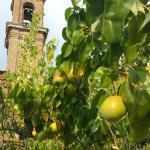 Photo de Hotel Certosa di Maggiano
