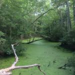 Photo de Nags Head Woods Ecological Preserve
