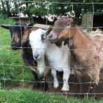 Foto de Polean Farm Cottages