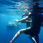 Beluga Diving swim with humpbacks