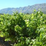 wine testing in Provence