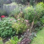 Joyce and Norman's lovely garden