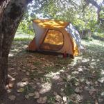 Tent and camping under the trees