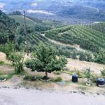 Agriturismo Agrihouse Foto