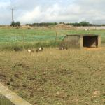 Penquite Farm Foto