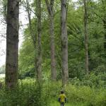 Ancient woodland walks by the river