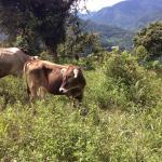 Foto de Hacienda Primavera Wilderness Ecolodge