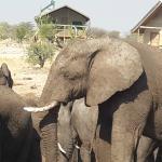 Photo de Elephant Sands Botswana