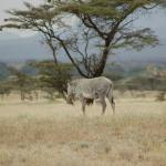 Great Samburu safaris in Kenya with African Servalcat Safaris