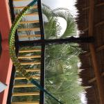 Photo of Casa Gatos