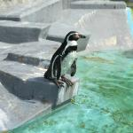 Zoo - pinguin