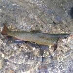 Hotel Hubertus in Filzmoos offers fly fishing for trout in crystal waters of Walm Mandling