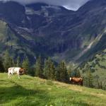 Carretera alpina del Grossglockner