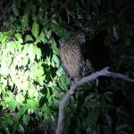 Kinabatangan Jungle Camp Foto
