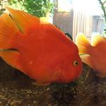 Lobby fish