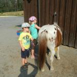 rent a Pony