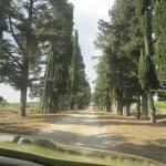 Stunning cryprese tress entrance to Borgo Stomennano