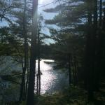 Barrett's Pond through the trees