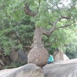 Végétation du parc