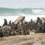 Фотография Wilderness Safaris Hoanib Skeleton Coast