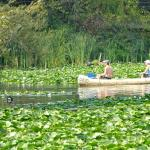 Lily Pads Abound