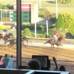 My horse winning